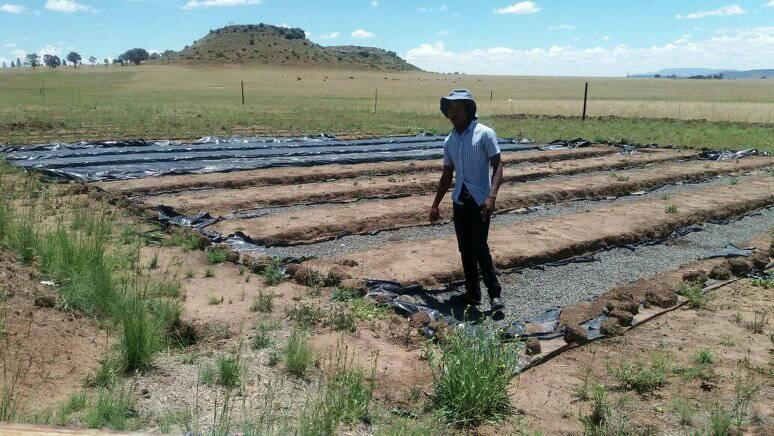 Leutsa Khobotlo of Greenlife Farm running his field work